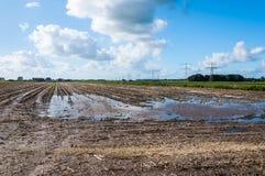 Stubblefeld mit Gummireifenspuren und -wasser Stockbild