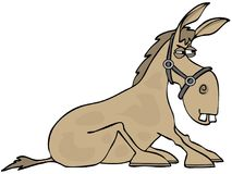 Stubborn donkey with its hooves planted Royalty Free Stock Images