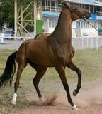 Stubborn horse Stock Image