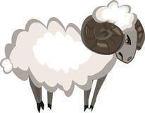 Stubborn ram. Stubborn white ram with horns Stock Images