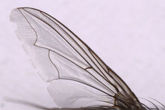 Stubenfliegen-Flügel Stockfotos