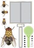 Stubenfliegen-Set Stockbilder