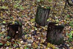 Stubs в лесе Стоковая Фотография