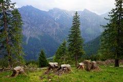 Stubs и деревья Стоковое Изображение