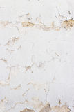 Stucco wall background Stock Image