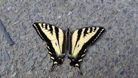 Stuck. Broken wing butterfly Stock Photo