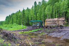 Stuck log truck loaded with logs. Stock Photo