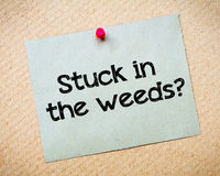 Stuck in the weeds? Royalty Free Stock Photography