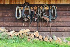 Stud farm in Poland. Horse harness and leather collars royalty free stock images