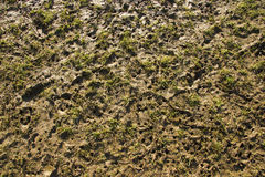 Stud marks on muddy pitch