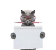 Studend del gatto alla scuola che tiene pezzo di carta Immagini Stock