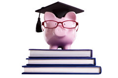 Student college graduate Piggybank isolated on white background Stock Image