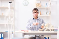 The student doctor studying animal skeleton. Student doctor studying animal skeleton Stock Image