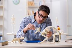 The student doctor studying animal skeleton. Student doctor studying animal skeleton Stock Images
