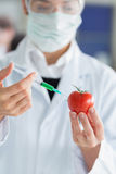 Student injecting liquid in a tomato Stock Photo
