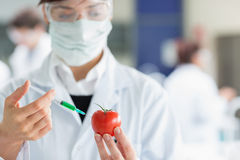Student injecting tomato in the laboratory Royalty Free Stock Photo