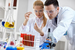 Student looking at a microscope slide in a laboratory Royalty Free Stock Photography