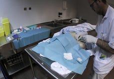 Student medycyny pracuje przy kostnicą 006 Zdjęcie Stock
