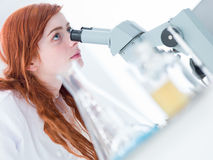 Student microscope analysis Stock Photography