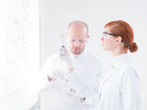 Student pill analysis Royalty Free Stock Photography