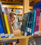 Student reading book amid bookshelves in the library Royalty Free Stock Image