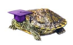 Studente della tartaruga Immagine Stock
