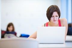 Studente di college grazioso e giovane che studia nella biblioteca Fotografia Stock