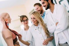 Studenter av medicin som undersöker den anatomiska modellen i klassrum Fotografering för Bildbyråer