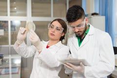 Studentforskare som arbetar i labb royaltyfria bilder