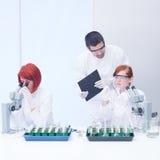 Studenti che lavorano nel laboratorio di chimica Fotografia Stock