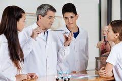 Studenti del professor Teaching Experiment To dentro Immagine Stock Libera da Diritti