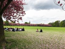 Studenti Edimburgo dei prati Fotografie Stock