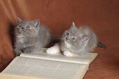Studenti saggi del gatto del gattino Fotografia Stock Libera da Diritti