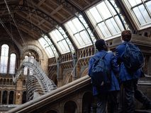Students wearing blue jacket interestedly looking at huge Blue Whale skeleton. As exhibited in Natural History Museum, London. Shot on 13feb2019 stock image