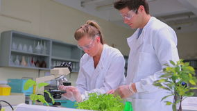 Students doing plant research in the lab stock video