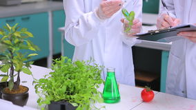 Students doing plants and vegetables research stock video