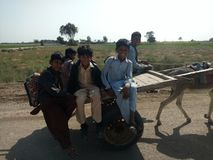 Students on donkey cart stock photography