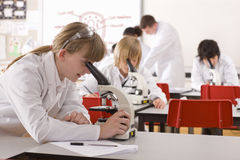 Students looking into microscopes in school laboratory Royalty Free Stock Photos