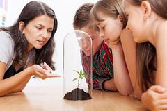 Students looking at plant inside greenhouse. Teacher explains about greenhouse effect and global warming using a plant enclosed into glass tube Royalty Free Stock Image