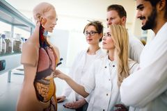 Students of medicine examining anatomical model. In classroom Royalty Free Stock Images