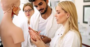 Students of medicine examining anatomical model in classroom Stock Photos