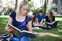 Students studying in campus Stock Photography