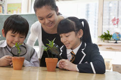 Students and teacher examining potted plants through magnifying glass Stock Images