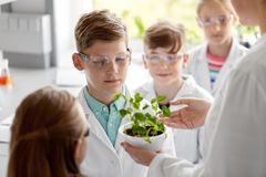Students and teacher with plant at biology class. Education, science and school concept - students and teacher with plant at biology class royalty free stock images
