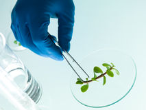 Studera en växt i labbet arkivbild