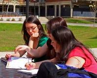 studera för högskolaflickor Royaltyfria Foton