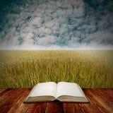 Studi con l'agricoltura, libro sulla piattaforma con il backgr del giacimento del riso Immagine Stock