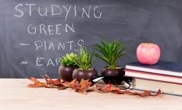 Studiando gli argomenti verdi con la natura obietta nel environme dell'aula Fotografia Stock
