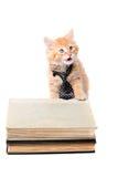 Studieintresserad orange kattunge med bandet Royaltyfri Bild