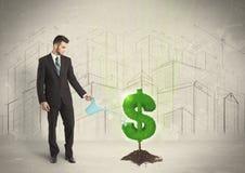 Studierendes Wasser des Geschäftsmannes auf Dollarbaumzeichen auf Stadthintergrund Lizenzfreies Stockbild